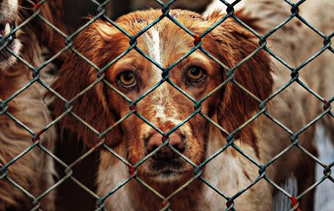 What is an Animal Rights Activist?